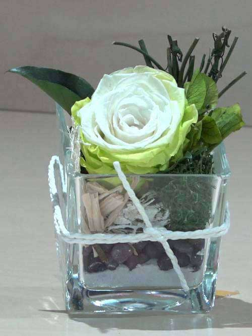 Rosa preservata bianca su vetro