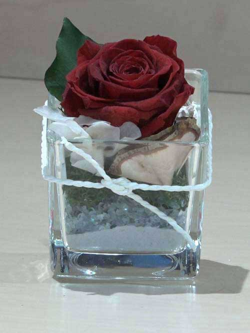 Rosa preservata rossa su vetro