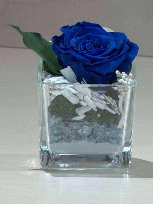 Rosa preservata blu su vetro