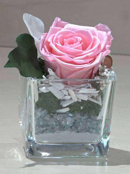 Rosa preservata rosa su vetro