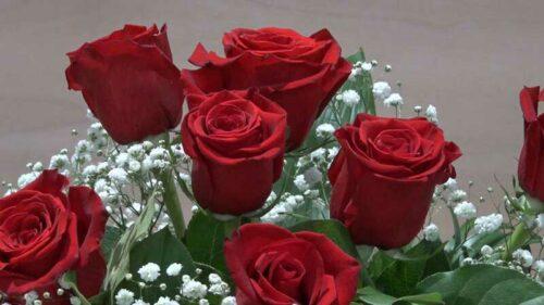 Mazzo di 7 Rose rosse a gambo lungo